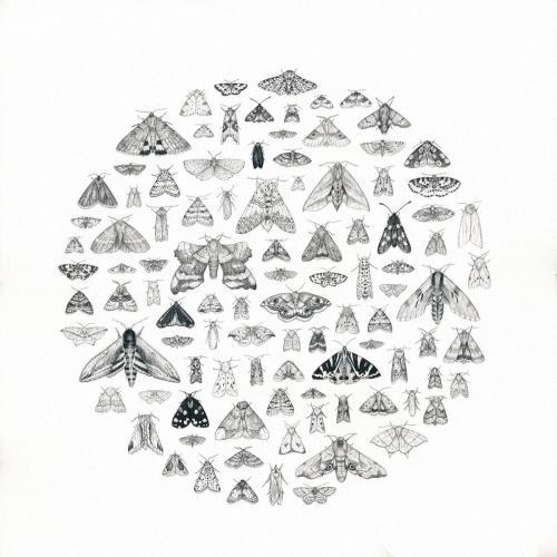 Dani Williams - 100 black and white moths