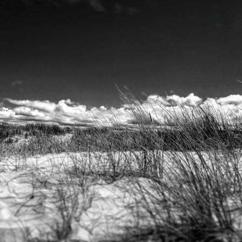 Vicky Evans - Rock Dunes